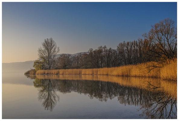 """Uferlandschaft NSG """"Bodenseeufer"""" zwischen Bodman und Ludwigshafen 3154"""