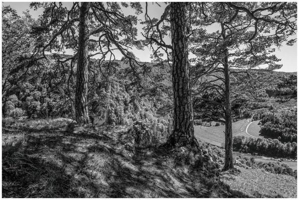 Blick vom Bandfelsen ins Donautal 7565