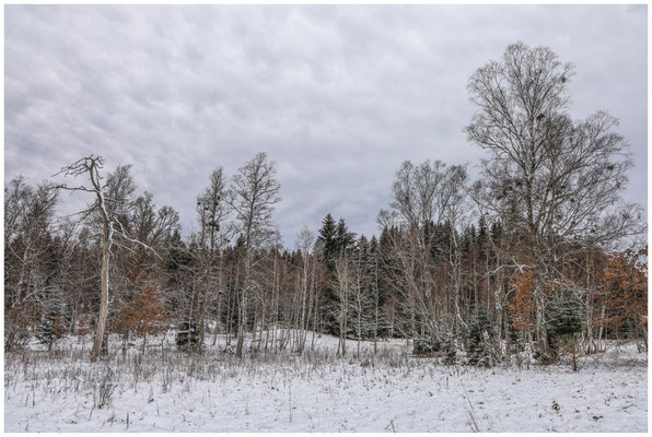 Landschaft im Irndorfer Hardt 5380