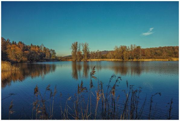 Uferlandschaft Böhringer See 1555