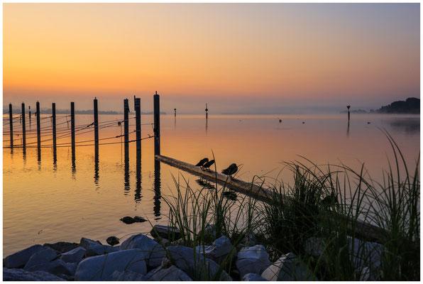 Morgendämmerung über dem Zeller See 0494