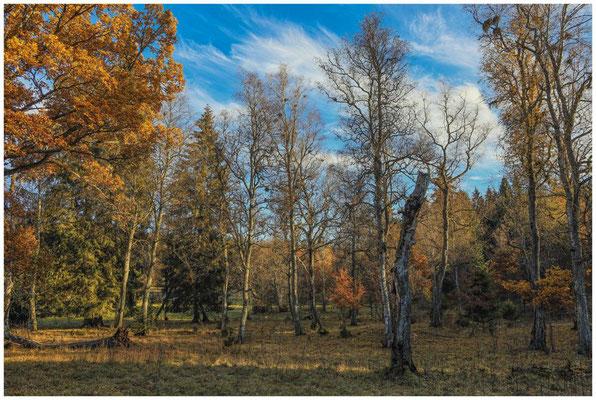 Landschaft im Irndorfer Hardt 4547