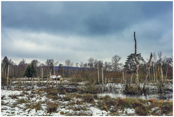 Moorteich mit Totholz und ehemaliger Torfhütte 5255