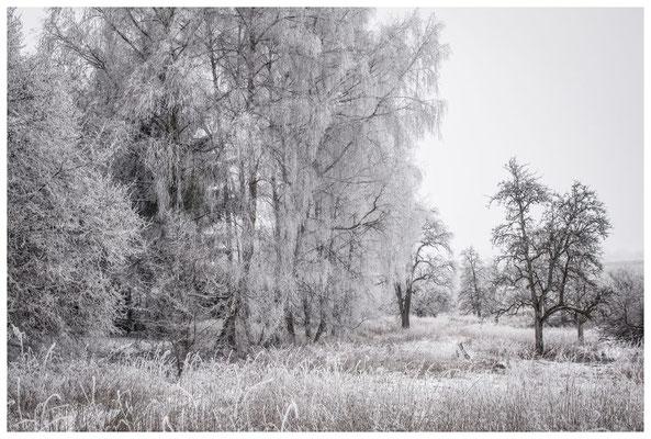 Winterlandschaft im Hegau bei Stockach 2408
