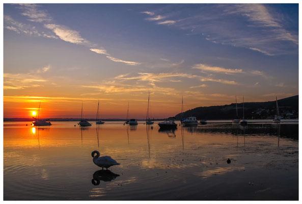 Ankernde Boote und Wasservögel bei Sonnenaufgang - Hemmenhofen - Halbinsel Höri 9755
