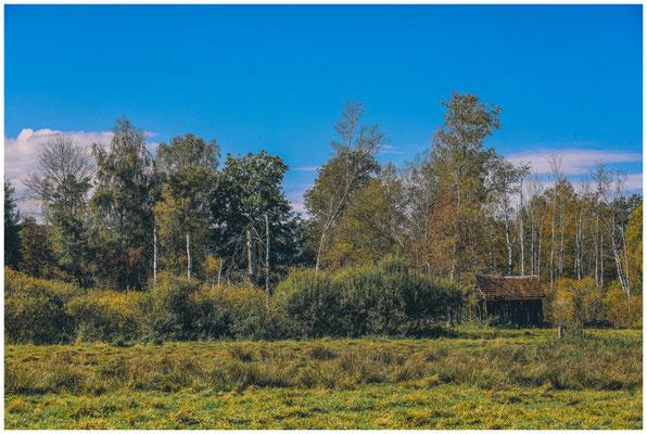 Landschaft im Pfrunger-Burgweiler Ried mit ehemaliger Torfhütte 4412