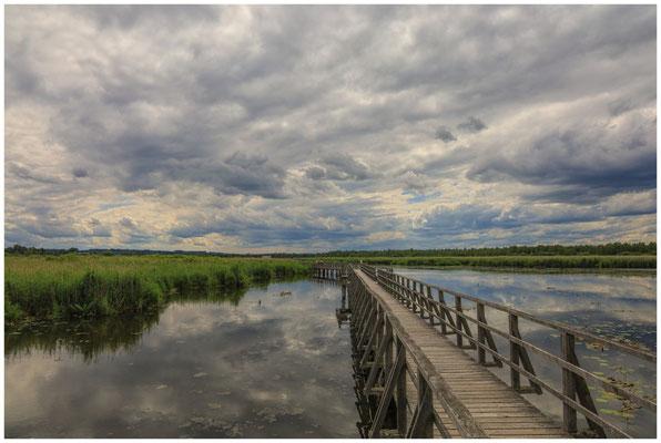 Uferlandschaft Federsee mit Steg 3378