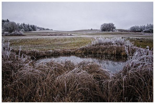 2150 Kleines Biotop zwischen Mahlspüren im Hegau und Raithaslach - Stockach