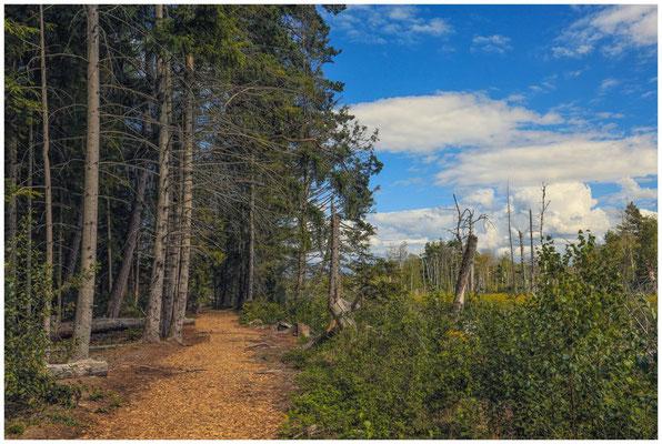 Wanderweg im Bannwald 3655