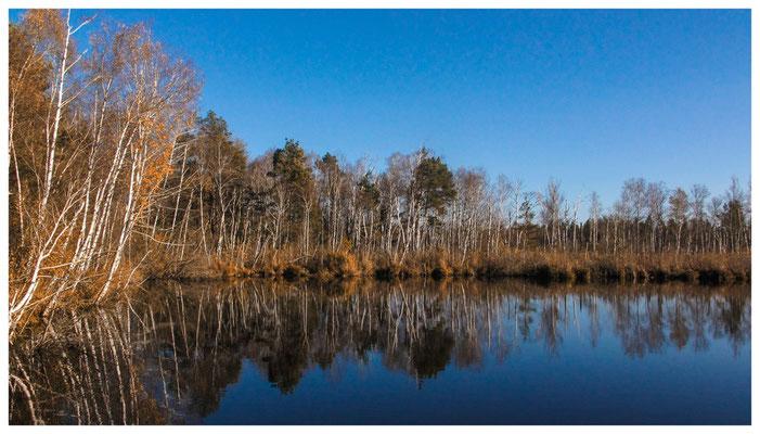 Uferlandschaft Fünfeckweiher 7286
