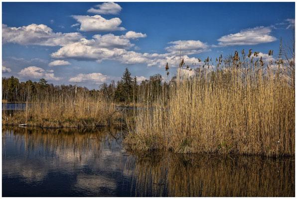Uferlandschaft Großer Vogelsee 2120