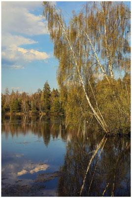 Uferlandschaft Großer Vogelsee 2169