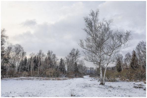 Landschaft  im Pfrunger-Burgweiler Ried 5574