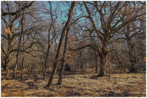 Bäume im Unterhölzer Wald 6151