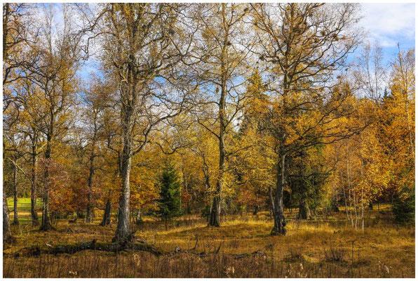 Bäume im NSG Irndorfer Hardt 1319