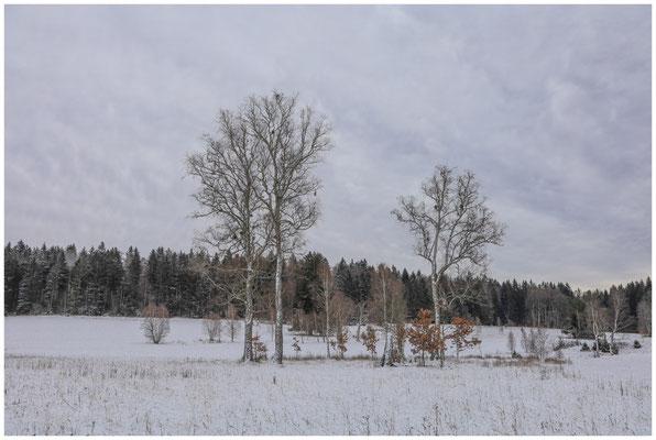 Landschaft im Irndorfer Hardt 5394