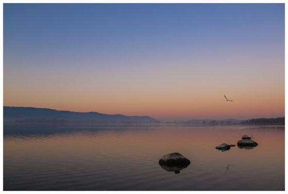 Morgendämmerung an der Radolfzeller Mole - mit Blick auf die Halbinsel Höri 2697