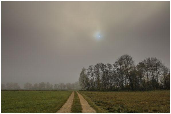 Nebel im Hausener Aachried 4681