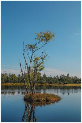 Uferlandschaft Wildsee 4315
