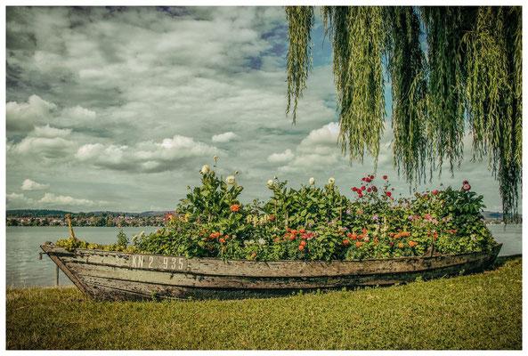 Bunt bepflanztes Blumenboot auf der Insel Reichenau - im Hintergrund der Gnadensee 9228