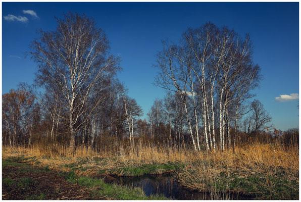 Landschaft mit Wassergraben im Pfrunger-Burgweiler Ried 6646