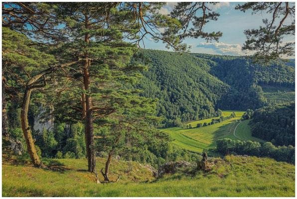 Blick vom Bandfelsen ins Donautal 7819