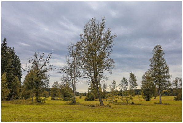 Landschaft im Irndorfer Hardt 8620