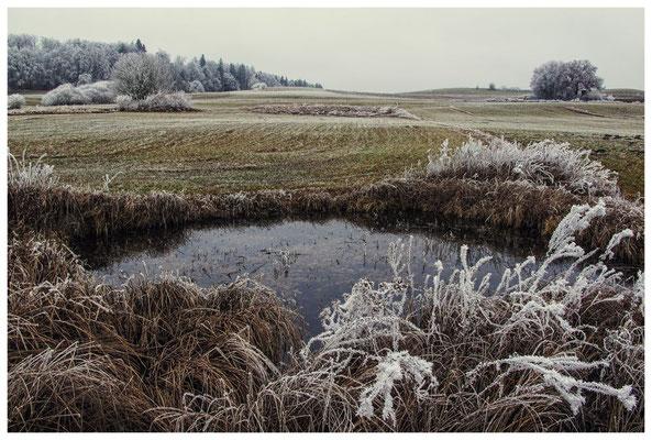 2148 Kleines Biotop zwischen Mahlspüren im Hegau und Raithaslach - Stockach