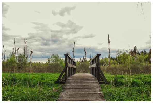Bohlenwege und kleine Brücken führen durch das Ried 3635