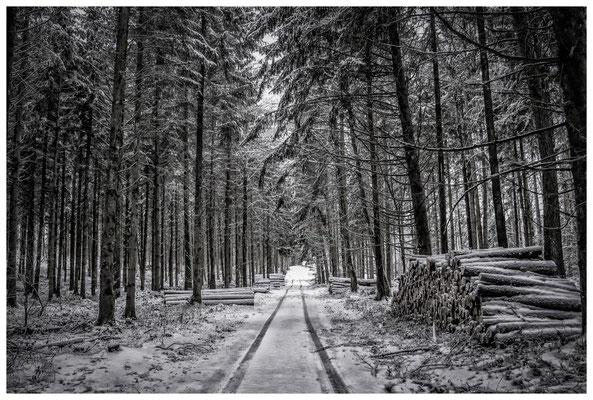 2270 Winterwald