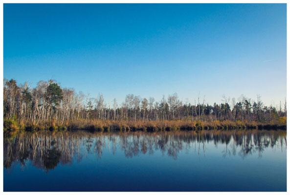 Uferlandschaft Fünfeckweiher 7293