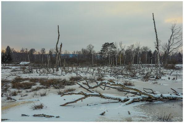 Moorlandschaft mit Hütte und Totholz im Pfrunger-Burgweiler Ried 5605