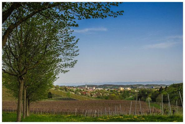 Blick auf Markdorf mit Alpenkette 3513
