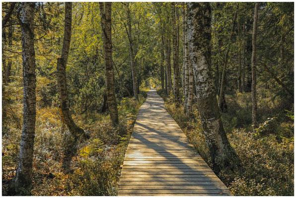 Bohlenwege führen am Wildsee vorbei durch das Moor 4301