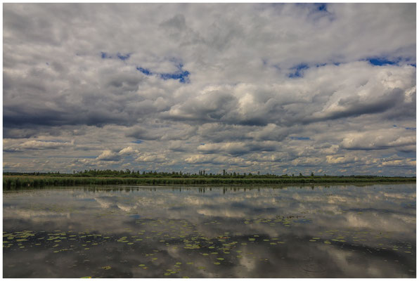 Uferlandschaft Federsee 3370
