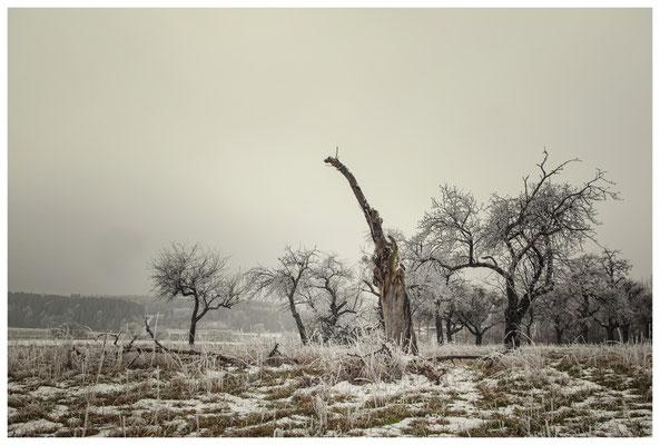 Winterliche Streuobstwiese mit Raureif 2534