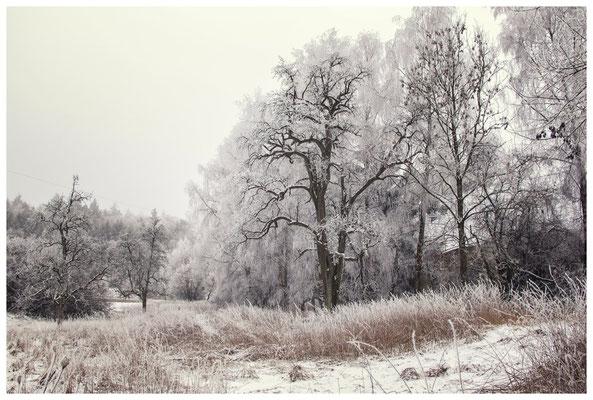 Winterlandschaft mit altem Bauernhaus bei Stockach 2425