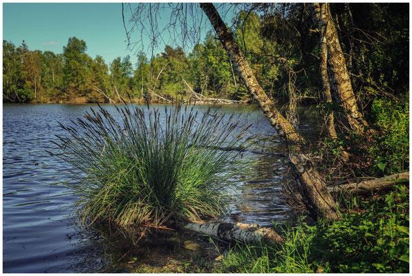 Uferlandschaft Moorsee 7395