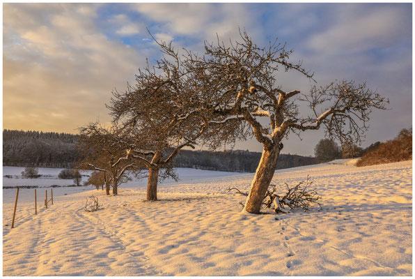 Landschaft bei Münchhöf mit Obstbäumen 5463