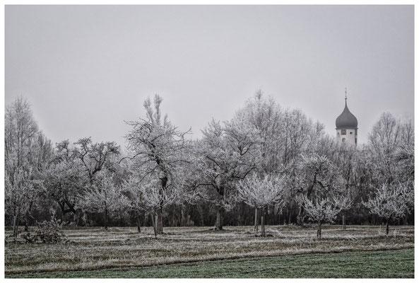 2077 Obstbäume bei Raithaslach mit Kirchturm im Hintergrund