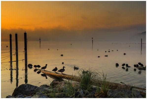 Nach Sonnenaufgang am Zeller See in Moos 3517