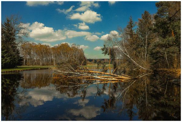 Moorteich mit umgestürzten Bäumen 6615