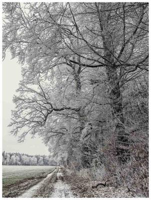 2156 winterlicher Weg
