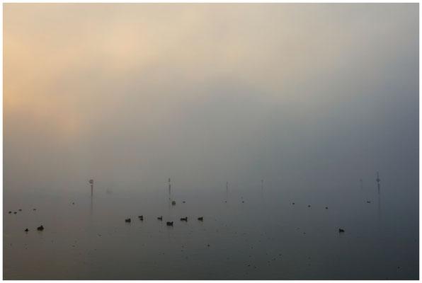 Nebel über dem Zeller See bei Moos 3473