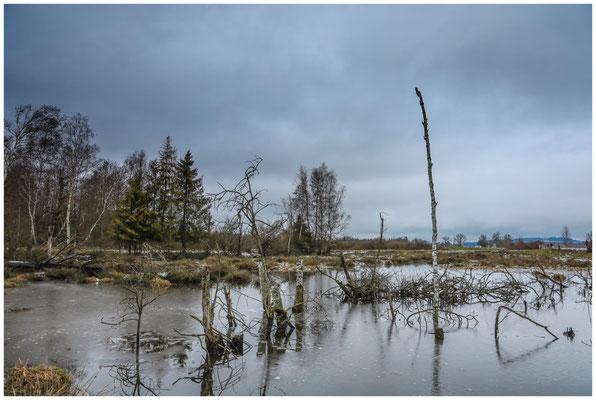 Moorlandschaft im Pfrunger-Burgweiler Ried 5252