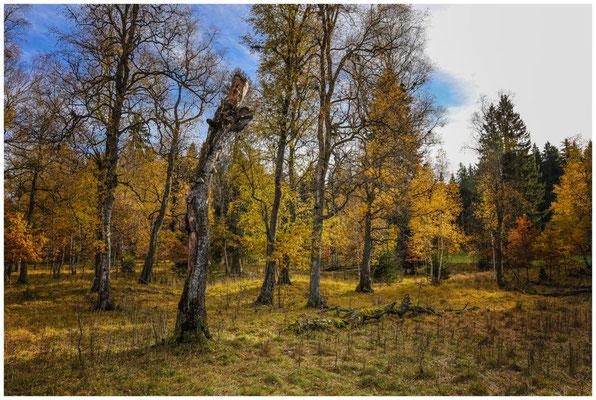 Bäume im NSG Irndorfer Hardt 1329