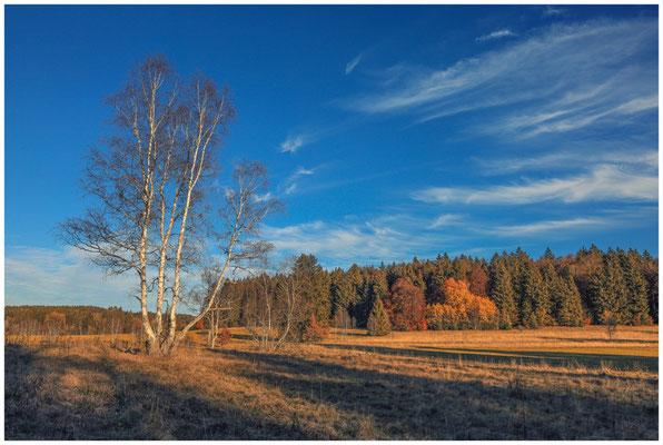 Landschaft im Irndorfer Hardt 4558