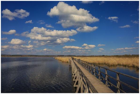 Uferlandschaft Federsee mit Steg 6915