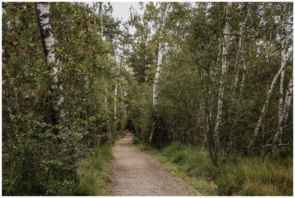 Uferweg im Schwenninger Moos 4252