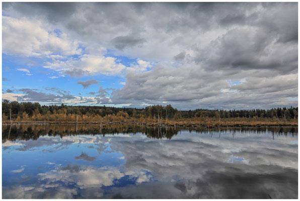 Uferlandschaft Schwenninger Moos 4191